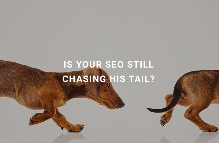 seo-chasing-tails